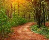 Kolorowa ślad ścieżka w zielonym deciduous lesie w świetle słonecznym przy zmierzchem, drewno krajobraz obraz stock