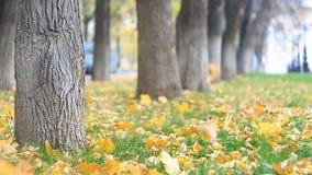 Kolorowa aleja w jesień parku, liście jest fallng Samochody iść na tle swobodny ruch zbiory wideo