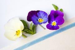 Kolorowa altówka kwitnie w kopercie Zdjęcia Royalty Free