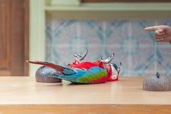 kolorowa ara zdjęcie stock