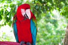 Kolorowa ara relaksuje akcję przeciw naturalnemu tłu obrazy stock