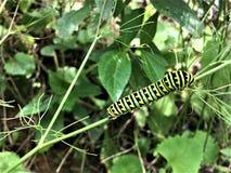 Kolorowa dżdżownica upokarza na roślinie fotografia royalty free