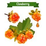 Kolorowa gałąź Clowdberry 2 Obrazy Stock
