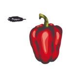 Kolorowa ilustracja dzwonkowy pieprz Obraz Stock
