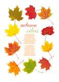 Kolorowa jesień liści granica Fotografia Stock