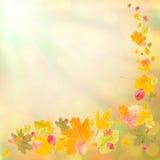 Kolorowa jesień background-2 Zdjęcia Stock