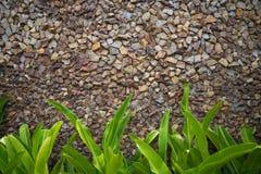 Kolorowa kamiennej ściany tekstura z zielonymi liśćmi Zdjęcie Royalty Free