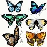 Kolorowa kolekcja wektorowi realistyczni motyle Zdjęcia Royalty Free