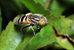 kolorowa komarnica zdjęcia royalty free