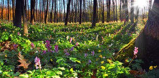 kolorowa krajobrazowa wiosna Obraz Stock