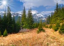 kolorowa krajobrazowa wiosna Zdjęcie Royalty Free