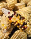 Kolorowa kukurudza Zdjęcie Royalty Free