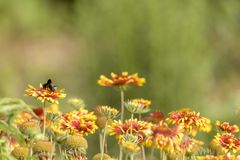 Kolorowa kwiat łąka z asterami Obrazy Stock