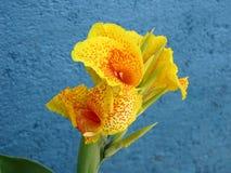 kolorowa kwiat orchidei Fotografia Stock