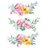 Kolorowa kwiecista kolekcja z różami, kwiatami, liśćmi, tłustoszowatą rośliną, gałąź i więcej, ilustracja wektor