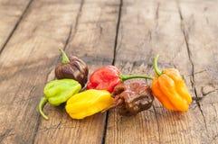 Kolorowa mieszanka gorącego chili pieprze Zdjęcie Royalty Free