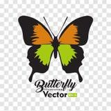 Kolorowa Motylia ilustracyjna wektorowa kolekcja royalty ilustracja