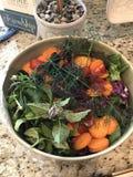 Kolorowa ogrodowa sałatka Fotografia Stock