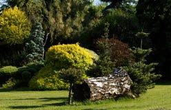 kolorowa ogrodowa wiosna Zdjęcie Royalty Free