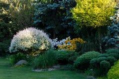 kolorowa ogrodowa wiosna Obrazy Stock
