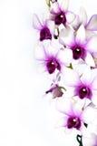 kolorowa orchidea Zdjęcie Stock