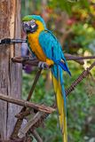 Kolorowa papuga Zdjęcie Royalty Free