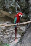 Kolorowa papuga. Zdjęcia Stock