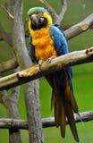 Kolorowa papuga Zdjęcia Stock