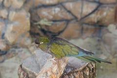 Kolorowa papuga w klatce w zoo zdjęcia stock