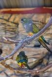 Kolorowa papuga w klatce w zoo obrazy stock