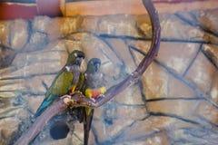 Kolorowa papuga w klatce w zoo zdjęcie royalty free