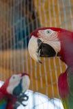 Kolorowa papuga w klatce w zoo zdjęcie stock