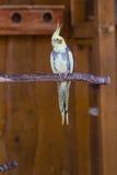 Kolorowa papuga w klatce w zoo obraz royalty free