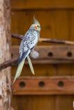 Kolorowa papuga w klatce w zoo fotografia stock