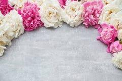 Kolorowa peonia kwitnie na szarym tle Odbitkowa przestrzeń, odgórny widok Obrazy Stock