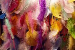 Kolorowa piórkowa kolekcja w dużo cienie fotografia stock