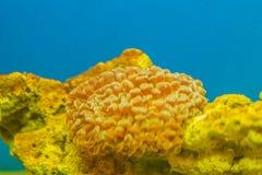 Kolorowa podwodna rafa koralowa w akwarium Podwodny światowy dowcip Fotografia Royalty Free
