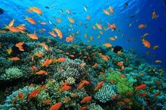 kolorowa rafa koralowa zdjęcie royalty free