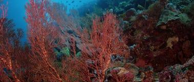 Kolorowa rafa koralowa z ciężkimi koralami, gąbkami i gorgonians, zbiory