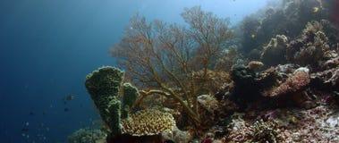 Kolorowa rafa koralowa z ciężkimi koralami, gąbkami i gorgonians, zbiory wideo