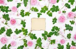 Kolorowa rama świeżych róż tło Zdjęcie Royalty Free
