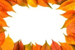 Kolorowa rama spadać jesień liście na białym tle Obraz Stock
