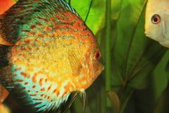kolorowa ryb Zdjęcia Stock