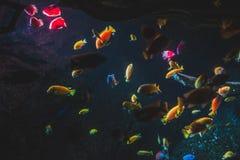 kolorowa ryb obrazy stock