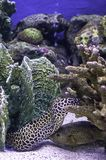 Kolorowa ryba w dennym tle koral, Tajlandia obrazy stock