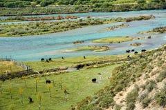 Kolorowa rzeka Zdjęcie Royalty Free