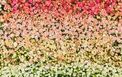 Kolorowa sztucznych kwiatów tekstura, tło Zdjęcie Stock