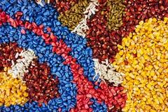 Kolorowa tekstura chemically taktujący kukurydzany kukurydzy uprawy ziarno Obrazy Stock
