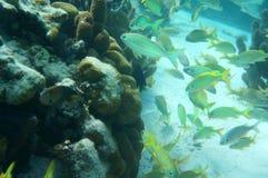 Kolorowa Tropikalna ryba Fotografia Royalty Free