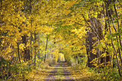 Kolorowa ulica w jesieni Obrazy Royalty Free